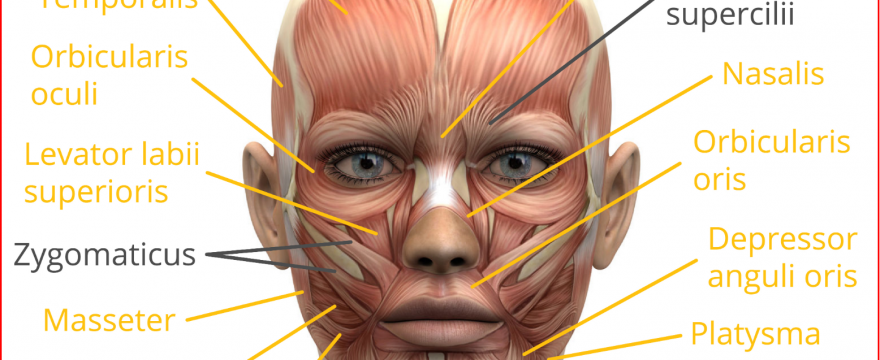 Facial Muscle Exercises: Purpose & Benefits (Updated 2020)
